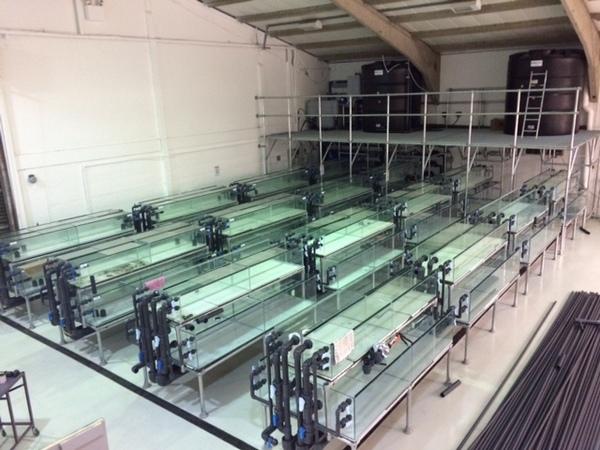 Tropical Fish International Newly Set Up Uk Wholesaler At Aquarist Classifieds
