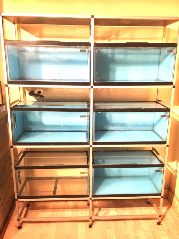 Fish tank racks breeding tanks fish house tank for Racks fish house