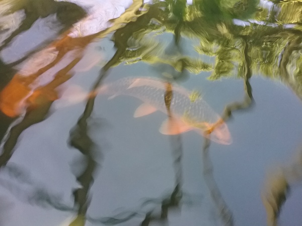 For sale well established pond of koi and all for Pond accessories for sale
