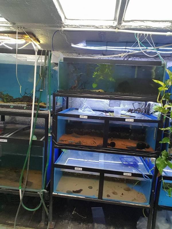 Bargain custom made fish tank racking systems for sale at for Custom made fish tanks
