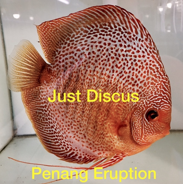 Thousands of discus fish for sale free delivery the for Fish stocking prices