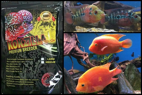 Kokzilla flowerhorn and big cichlid food at Aquarist Classifieds