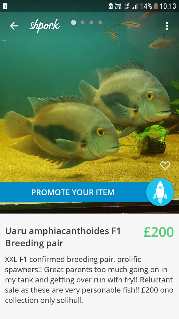 238e0fb7183 Aquarist Classifieds : All Adverts (view by new ads)