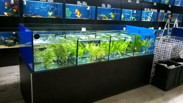 MERSEYSIDE AQUATIC WAREHOUSE - availability list at Aquarist Classifieds