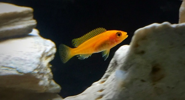 Aquarist Classifieds : somerset : Fishkeeping Adverts by County