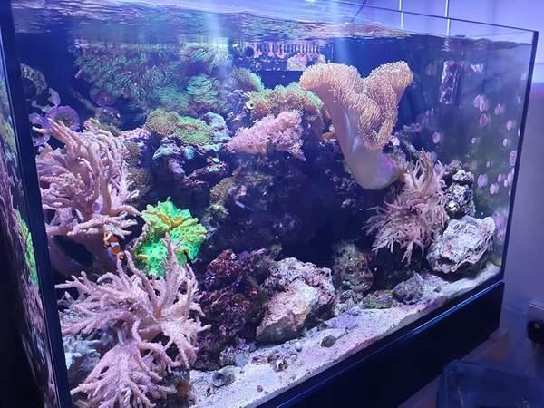 RED SEA REEFER 250 FULL MARINE SET UP FOR SALE at Aquarist ...