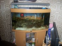 marine tank and stand ( including full marine setup and fish