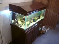 Various tanks and fish for sale in Forest of Dean