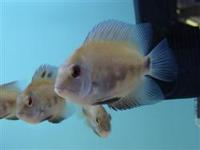 GOSFORTH PETS AND AQUATICS (NEWCASTLE) STOCK UPDATE..NATIONWIDE DELIVERY AVAILABLE