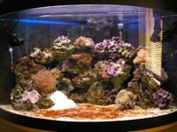 fluval venezia 190 corner aquarium tank marine closure fish corals inverts at aquarist. Black Bedroom Furniture Sets. Home Design Ideas