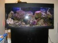 MARINE AQUARIUM SET UP