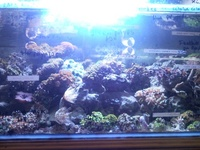 NEW LEDS IN AT SIMPLYSEAHORSES NEW PRICE