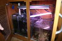 5ft Tank with stand and hood