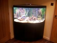 fluval venezia 350 corner aquarium with black stand at aquarist classifieds. Black Bedroom Furniture Sets. Home Design Ideas