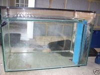 CHEAP 3ft x 1 1/2 ft marine tank with weir and sump + old fliter media