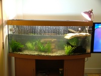 Jewel Vision 450 and Fluval FX5 External Filter