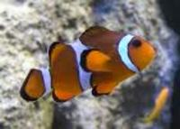 Discounted Mail Order Tropical And Marine fish
