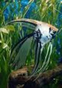 Discounted mail order tropical and marine fish at aquarist for Mail order fish