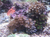 Mixed Polyp Rocks only �.00