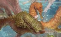 BANK HOLIDAY OFFER ON SEAHORSES