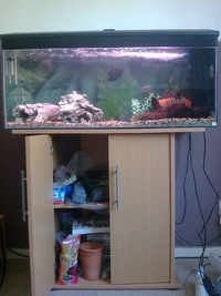 Stunning 3.5ft Full set up Aquarium