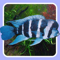 Tropical Fish Delivered to Your Door (for �95) Jan 17th