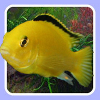Jewel Aquatics will deliver fish to your door for �95 per box.
