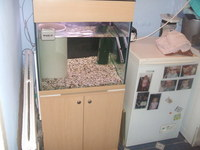 FOR SALE : 2FT SEABRAY CUBE TANK FULL SETUP WITH BEECH EFFECT STAND AND HOOD