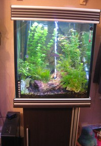 AQUA ONE CUBE TANK MARINE OR TROPICAL FULL COMPLETE SETUP