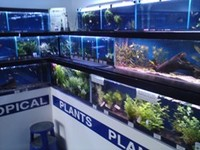 Sixhills Aquatics , Grimsby. NEW STOCK IN weekly