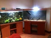 4 foot rena aquarium stand extras at aquarist classifieds for Aquarium rena