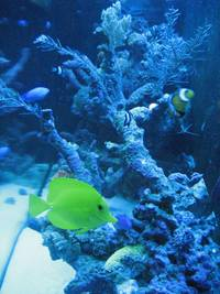 Marine reef tank with contents for sale - excl equipment