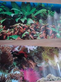 �for 2 doublesided waterproof wallpaper for your fish tank