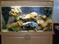 large marine aquarium with sump tank