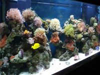 UK BASED: Corals import - Trades prices direct from - Vietnam - Bali - Miami - Australia - Indonesia