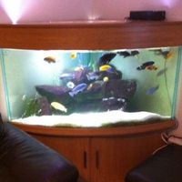 Full Set Up-Seabray corner fish tank. Dolphin range with Malawi ...