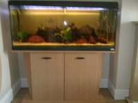 fluval 240 fish tank with stand �0