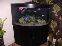 JUWEL TRIGON 350.. + MALAWI CICHLIDS.....?350 at Aquarist ...