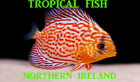 Northern Irelands top fish keeping forum