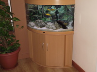 tropical fish tank full set up