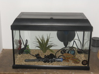 2FT FISH TANK AQUARIUM FULL SET UP