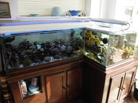 Aquarium with stand, sump and pipework for sale