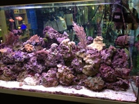 MARINE FISH AND ALL MARINE EQUIPMENT AT CHILTON AQUATICS. FULL SEACHEM RANGE IN STOCK WE ARE A SEACHEM PLATINUM DEALERSHIP