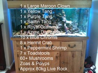 Large Solid Oak Marine Aquarium. Complete with livestock and all equipment.