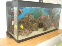 marine tank and equipment including fish, corals and inverts