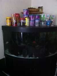 Juwel 350 Corner tank, FX5 Filter, Fish Food ETC ETC