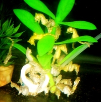 DWARF SEAHORSES AND H ERECTUS IN STOCK NOW