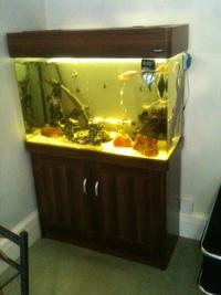 aqua one regency 100 fish tank aquarium full set up 220 litres. Black Bedroom Furniture Sets. Home Design Ideas