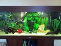 Juwel Rio Dark Wood 180L Aquarium - �0 ono