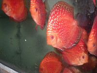 Discus For The Discerning.com now re open after another sucessful trip to Malaysia
